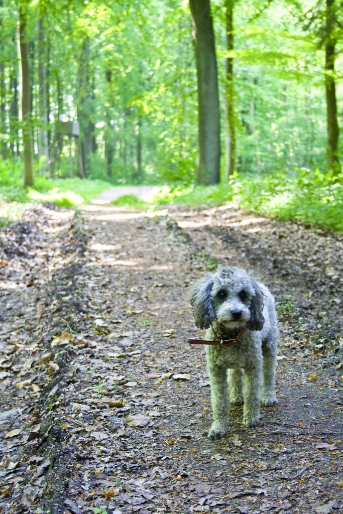 Hundeskoven